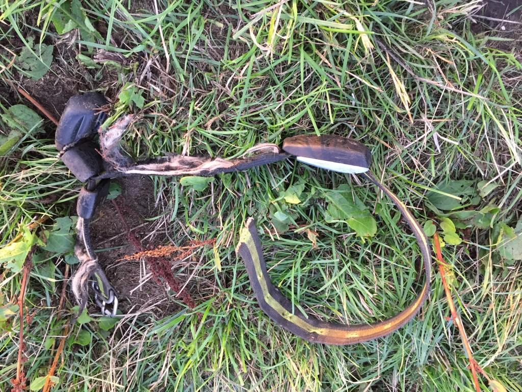 Endelig blev halsbånd og transponder fundet